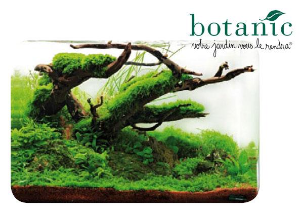 Source a id l 39 aquascaping l 39 art de vegetaliser un for Aquarium botanic